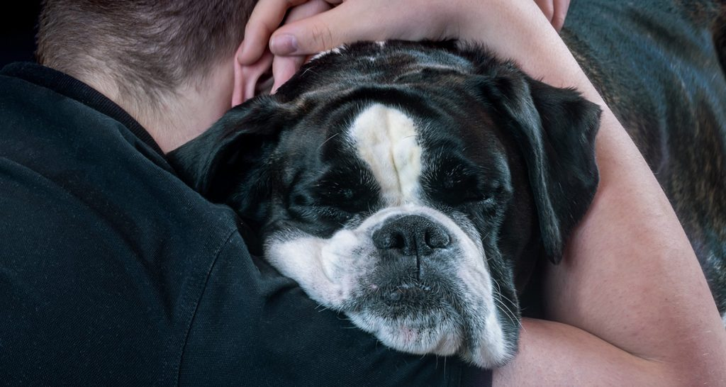 Grief after the loss of a pet man with a dog